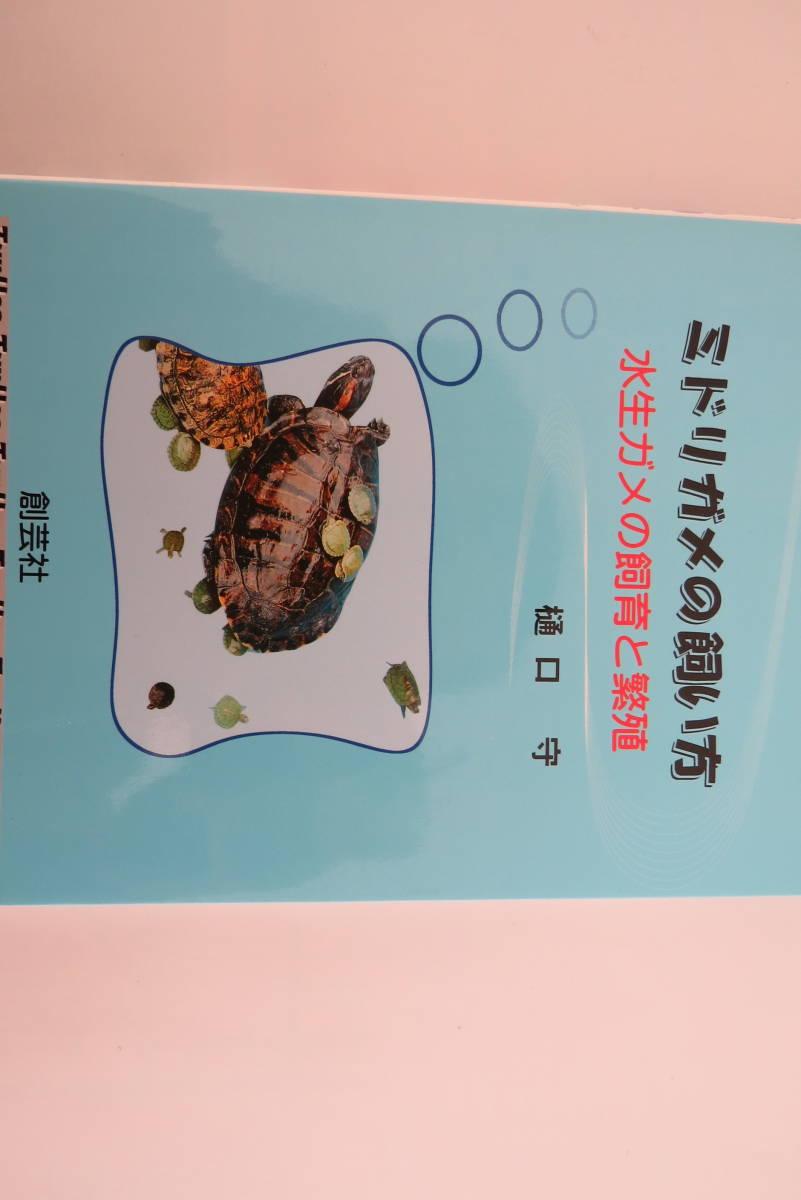 飼育 ミドリガメ