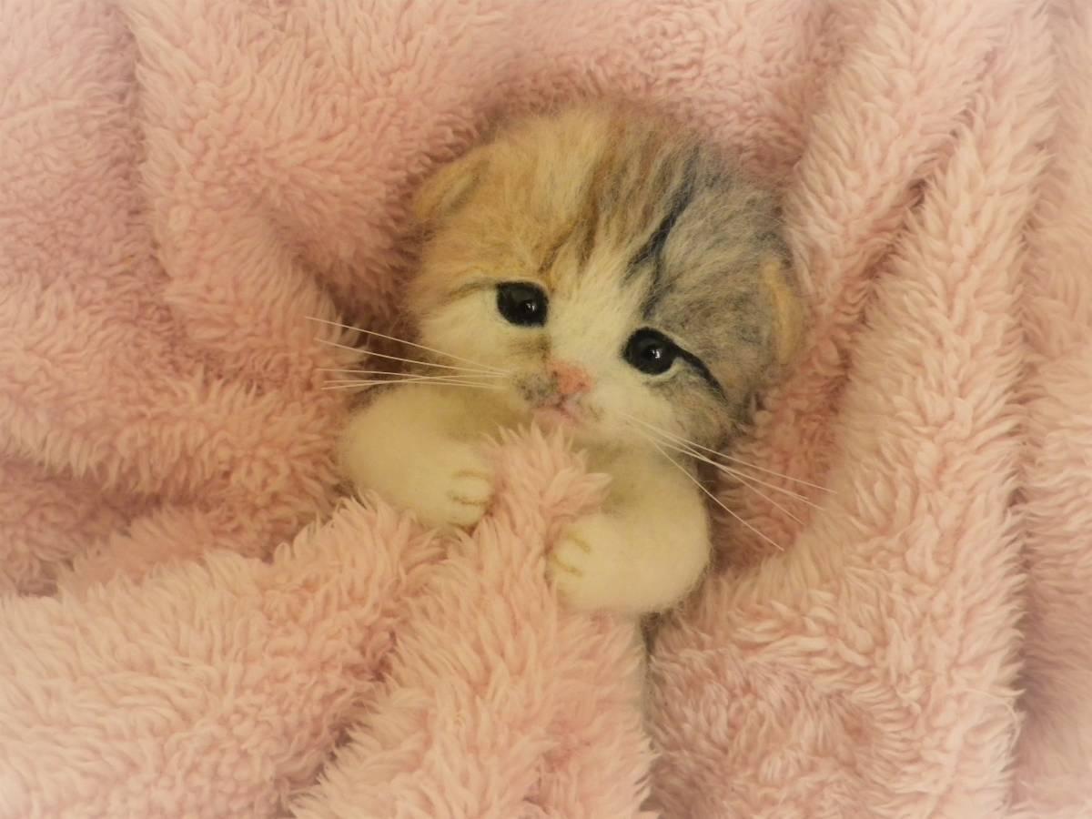 新品】funwari□□□ 羊毛フェルト 赤ちゃん猫 スコティッシュ